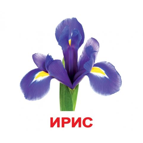 Карточки Домана Цветы с фактами Вундеркинд с пеленок купить Киев Украина