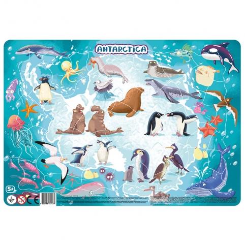Пазл DoDo с рамкой Антарктида 21*30*0,3см R300176