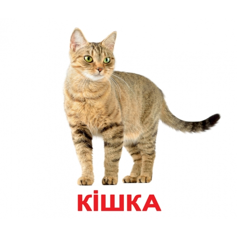 Картки Домана Свійскі тварини купити Київ з доставкої по Україні