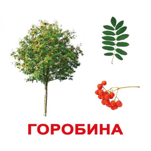 Карточки Домана Деревья (укр.яз) Вундеркинд с пелёнок