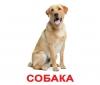 Карточки Домана Домашние животные Вундеркинд с пеленок купить Киев Украина