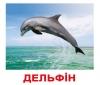 Карточки Домана Мои первые знания на укр. языке (рис1)