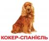 Карточки Породы Собак (укр.яз) Вундеркинд с пеленок