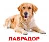 Карточки Домана Породы собак с фактами Вундеркинд с пеленок купить Киев Украина