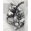 Картина по номерам Идейка Сладкий сон 40 x 50 см (КНО4069)