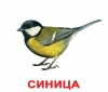 Картки Домана Птахи з фактами Вундеркінд з пелюшок купити Київ Україна