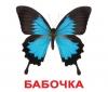 Карточки Домана Насекомые с фактами на русском языке Вундеркинд с пеленок купить
