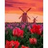 """Картины по номерах.Сельський пейзаж """"Тюльпаны на закате"""" 40*50 см (КНО2275)"""