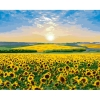 Картина по номерам - Соняшниковий рай (КНО2282)