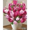 Картина по номерам- Букети Яскраві тюльпани 40*50см (КНО3006)