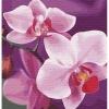Картина по номерам - Волшебная орхидея 30х30 см (КНО3105)
