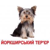 Карточки Домана Породы Собак  йоркширський терьер