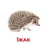 картки домана на українській мові купити київ з доставкої по україні