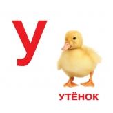 Карточки Домана Алфавит с фактами Вундеркинд с пеленок купить Киев Украина