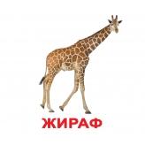 Карточки Домана Вундеркинд с пеленок Дикие животные купить Киев Украина