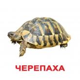 Комплект карточек Домана Вундеркинд с пеленок Домашние животные купить Киев Укра