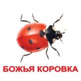 картки Домана комахи з фактами Вундеркінд з пелюшок купити Київ Україна
