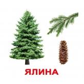 Карточки Домана Деревья (укр.яз) Ялина